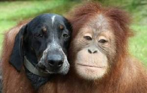 dog_monkey1