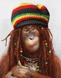 marley monkey