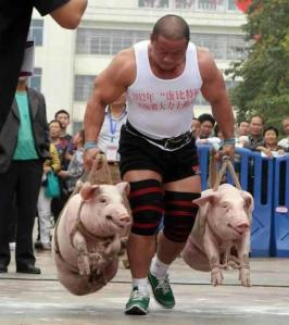Cheap-Alternative-of-doing-famer-walks-Do-them-with-Pigs